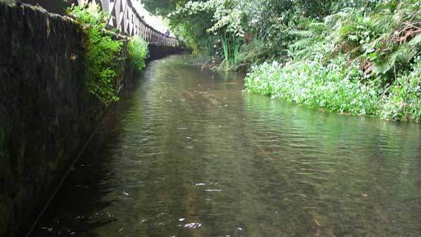 Rubbish on the River Tillingbourne