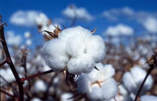 Organic Cotton, Sustainable Fashion   Watson & Wolfe