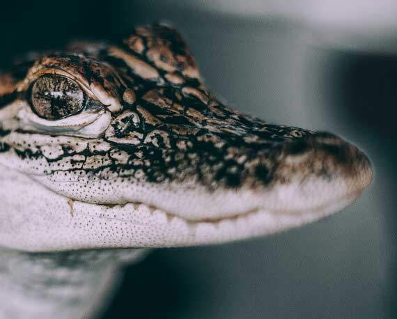 Selfridges Drops Exotic Skins | PETA Menswear Awards 2019