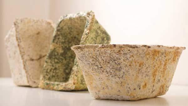 Greensulate Mushroom Insulation | Watson & Wolfe