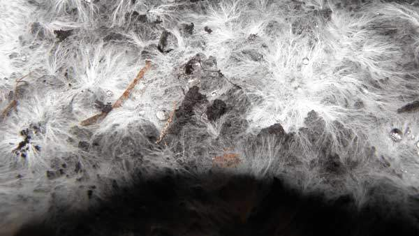 What is Mycelium | Watson & Wolfe