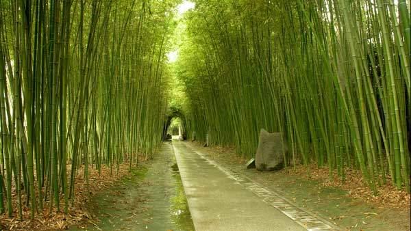 Bamboo Forest | Watson & Wolfe