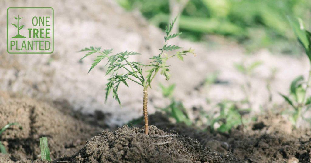 Buy A Wallet, Plant A Tree | Watson & Wolfe